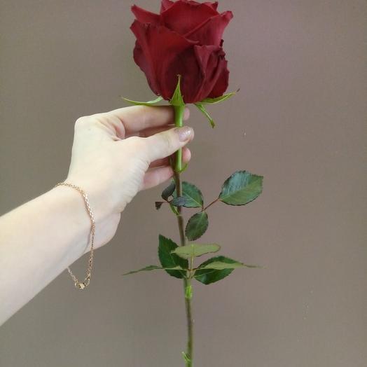 Роза Фридом Эквадор, 70 см