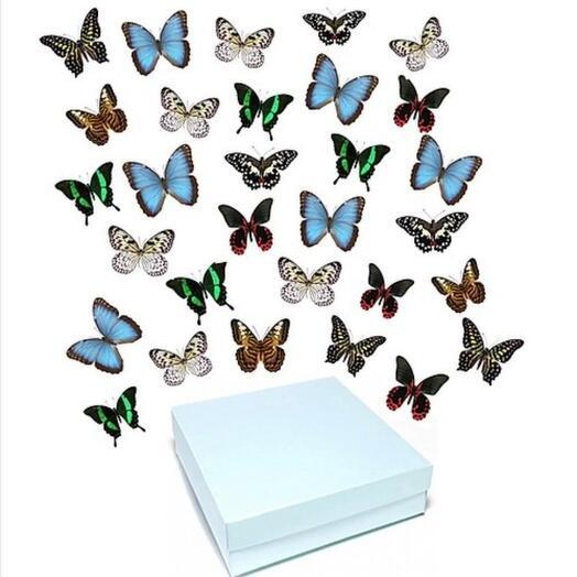 30 больших бабочек ⛲