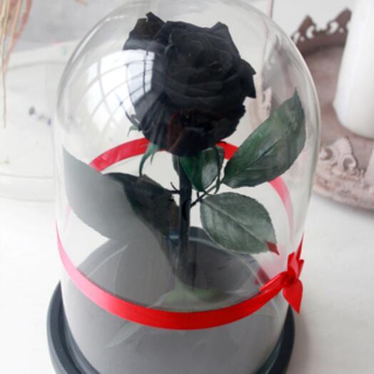 Роза в Колбе Живая Черная  Premium
