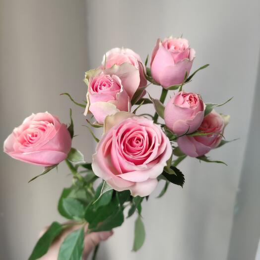 Роза кустовая Персик