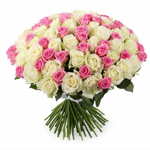 101 біло-рожева троянда