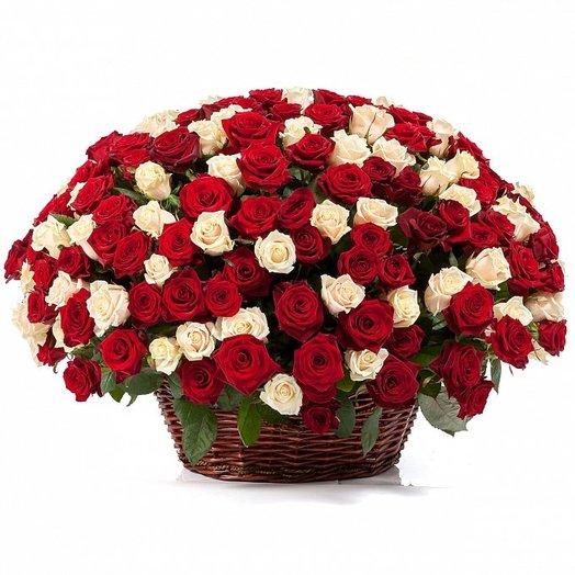 251 Бело-Красная Роза в корзине
