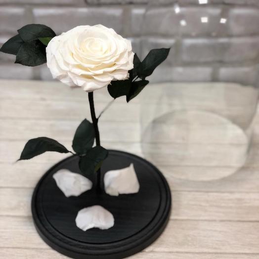 Белая Роза в Колбе KING: букеты цветов на заказ Flowwow