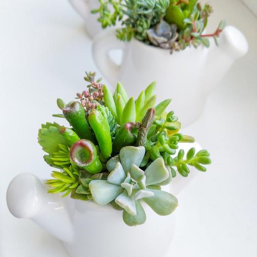 Суккуленты в керамической леечке: букеты цветов на заказ Flowwow