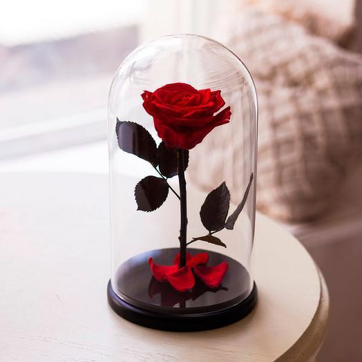 Роза в колбе «King» красная