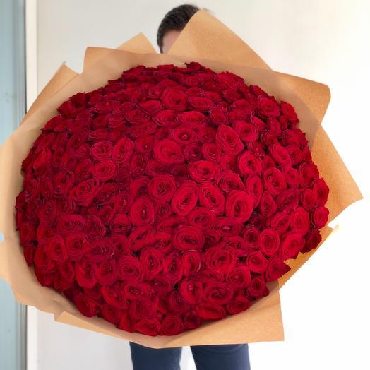201 Роза 🌹🌹🌹