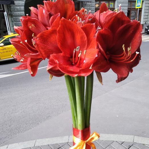 Шикарные огромные амариллисы: букеты цветов на заказ Flowwow