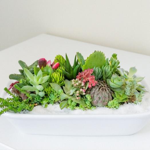 Флорариум в фарфором прямоугольном кашпо: букеты цветов на заказ Flowwow