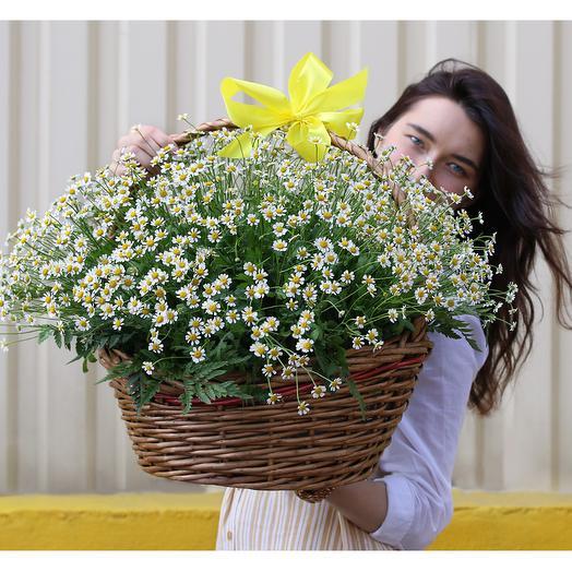 Корзина цветов 51 матрикария