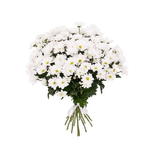 11 кустовых хризантем Ромашка