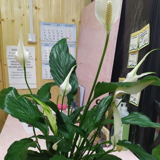 Женское счастье: букеты цветов на заказ Flowwow