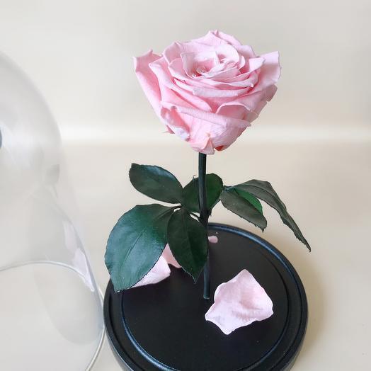 Роза в колбе стандарт розовая