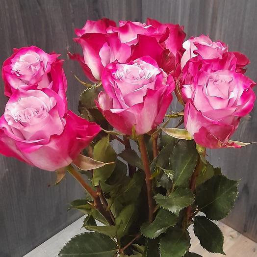 Пурпурно-фиолетовые розы
