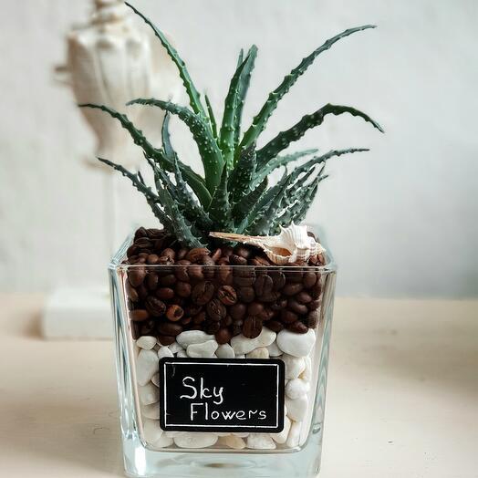 Комнатное растение Алоэ