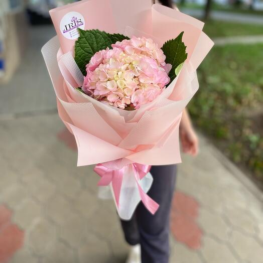 Гортензия в розовом