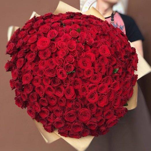 255 Красных роз Premium: букеты цветов на заказ Flowwow
