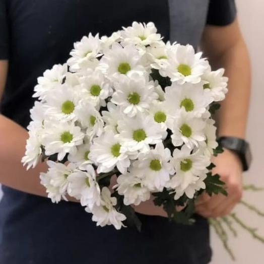 Кустовая хризантема Баккарди