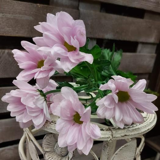Кустовая хризантема розовая поштучно