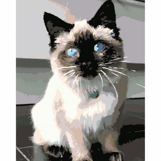 Картина по номерам Котик с голубыми глазами