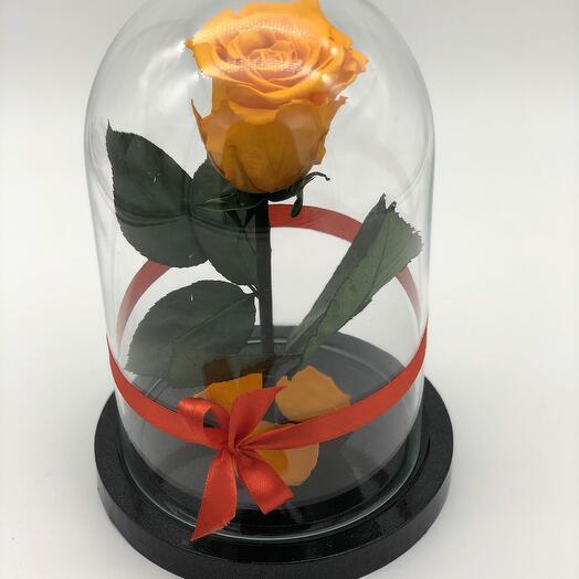 Роза в Стеклянно Колбе Оранжевая Мини