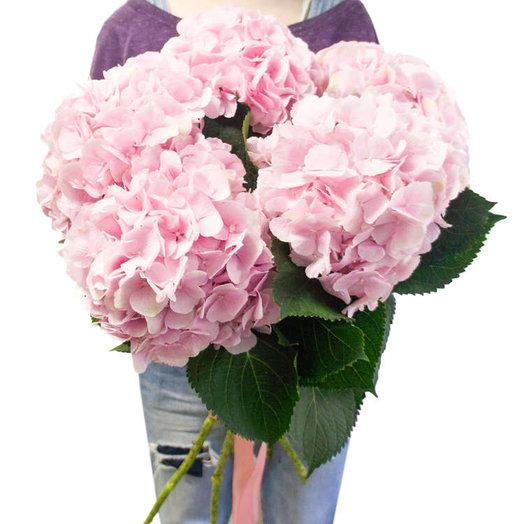 Гортензия 5: букеты цветов на заказ Flowwow