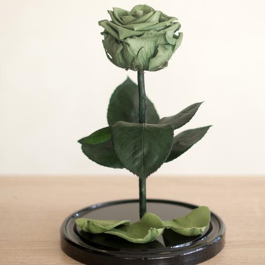 Роза в колбе Медиум зеленая
