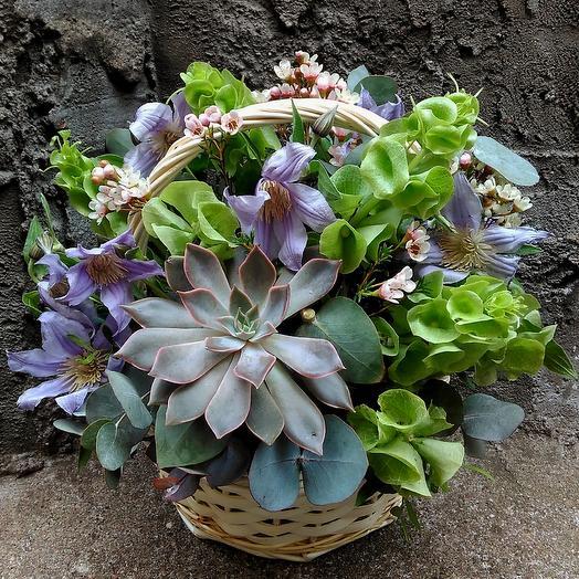 Эхеверия: букеты цветов на заказ Flowwow