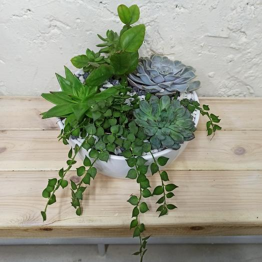Флора: букеты цветов на заказ Flowwow