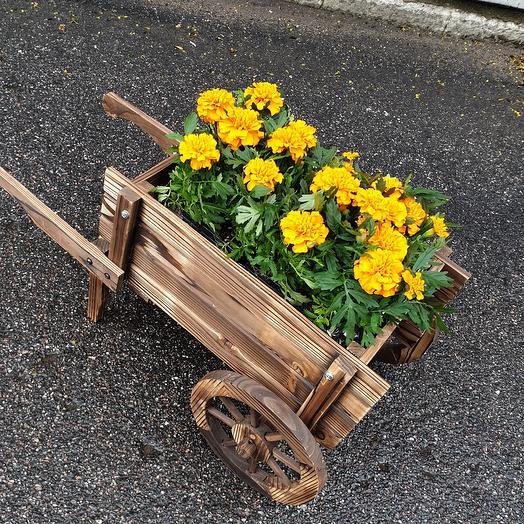 Тачка с бархацами: букеты цветов на заказ Flowwow