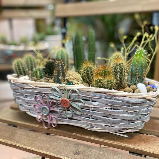 Композиция из кактусов «мексика»