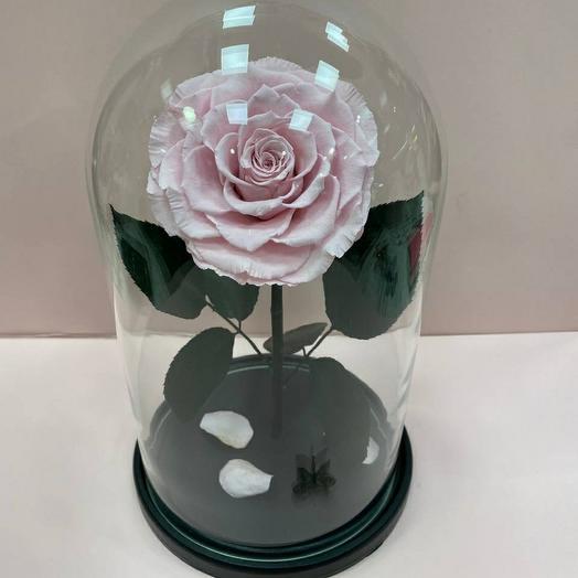 Роза в колбе  Премиум розовая