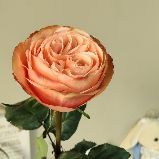 Кахала пионовидная  роза