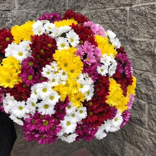 Хризантема кустовая 51: букеты цветов на заказ Flowwow