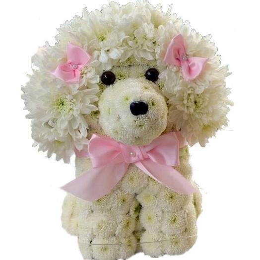 Красавица Белла: букеты цветов на заказ Flowwow