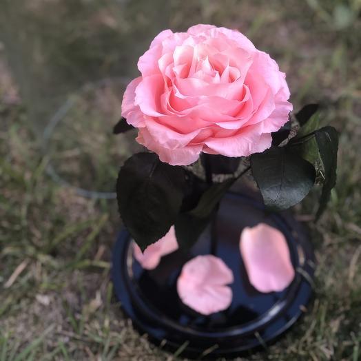 Вечная роза в колбе светло-розовая: букеты цветов на заказ Flowwow