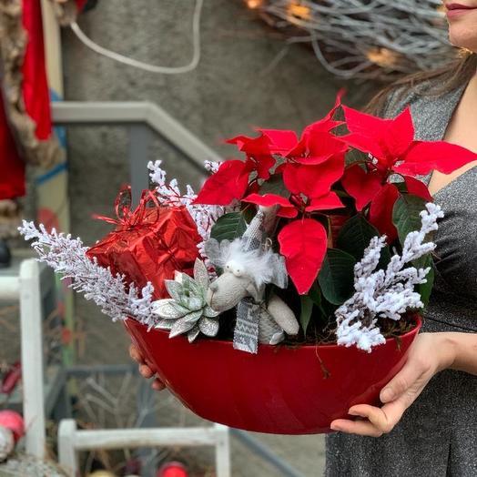 Пуансеция в кашпо: букеты цветов на заказ Flowwow