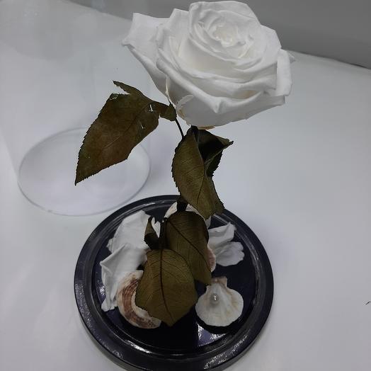 Роза в колбе =белая, розовая ,красная