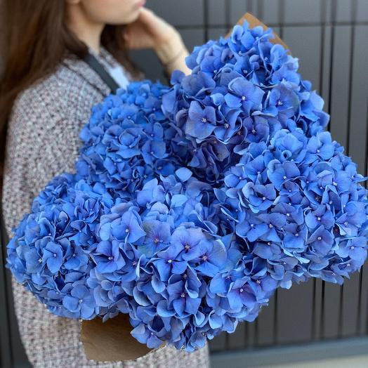 5 Blue Hydrangeas in 80cm
