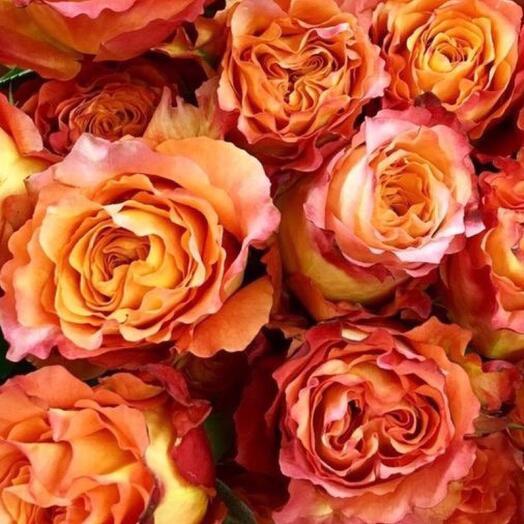 Яркие розы