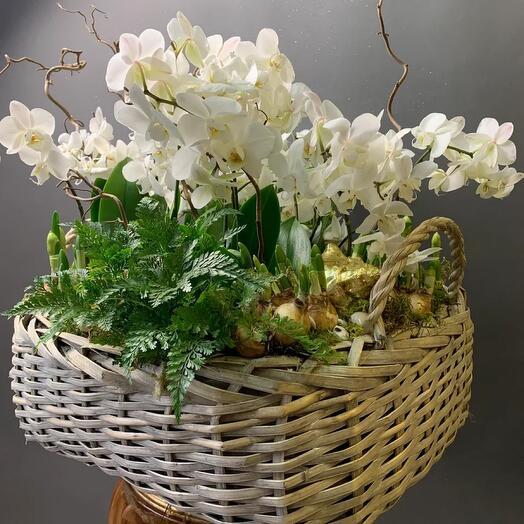 Большая корзина с орхидеями и папоротниками