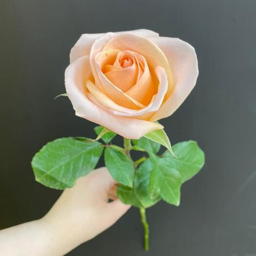 Роза Tiffany  Эквадор 70 см