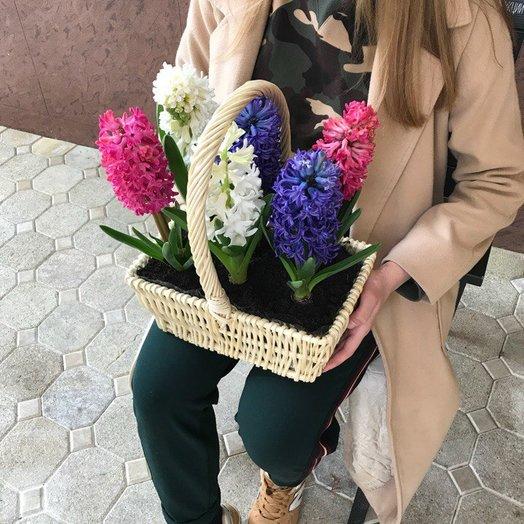 Гиацинты в корзине: букеты цветов на заказ Flowwow