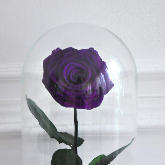 VAMPIRE VIOLET ФИОЛЕТОВАЯ РОЗА В КОЛБЕ PREMIUM: букеты цветов на заказ Flowwow