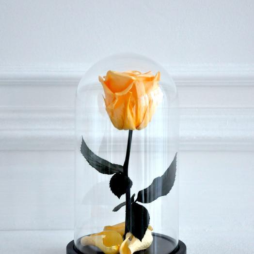 "Роза в колбе мини ""Луч солнца золотого"": букеты цветов на заказ Flowwow"