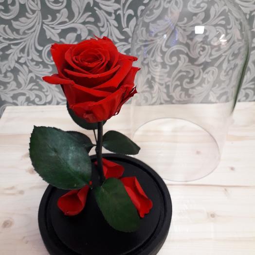 Стабилизированная роза в колбе Красная Premium: букеты цветов на заказ Flowwow