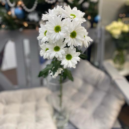 Хризантема кустовая Ромашковая