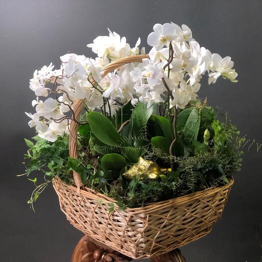 Корзина с орхидеями и папоротниками