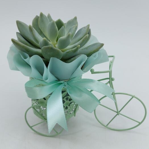 Каменная роза в кашпо велосипед
