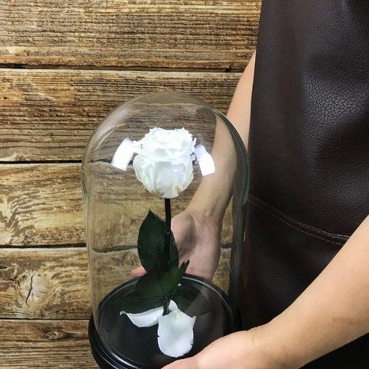 Белая роза в колбе: букеты цветов на заказ Flowwow