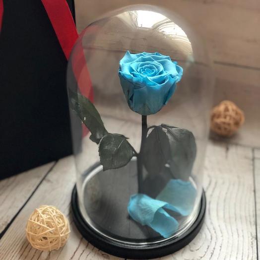 Живая роза в колбе цвет лазурь: букеты цветов на заказ Flowwow
